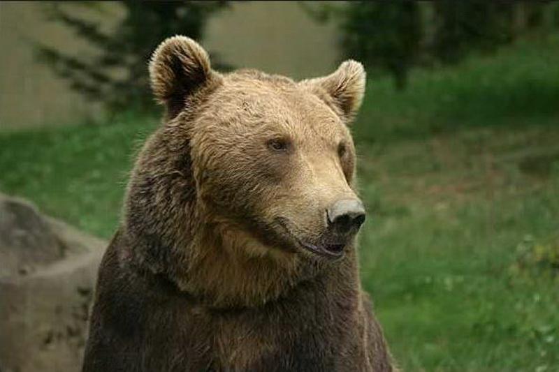 Vizualizati imaginile din articolul: Ziua lui Moş Martin, la Zoo Tîrgu Mureş