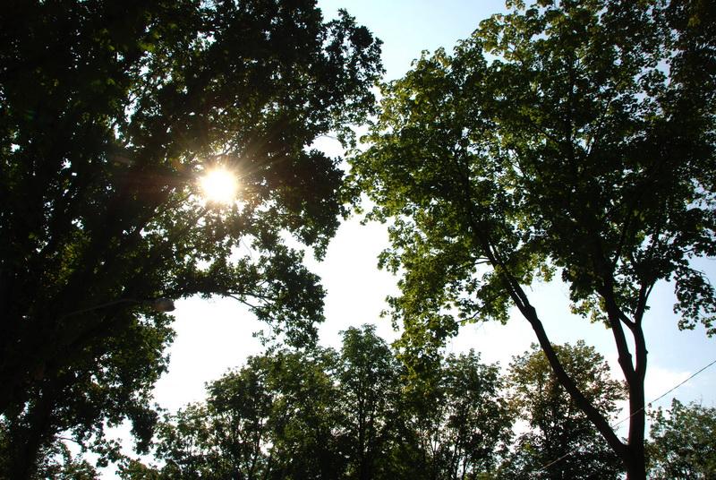 Vizualizati imaginile din articolul: Copacii din oraş – toaletaţi, îngrijiţi, protejaţi!