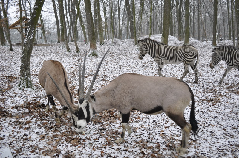Vizualizati imaginile din articolul: Platoul Cornești și Zoo Tîrgu-Mureș