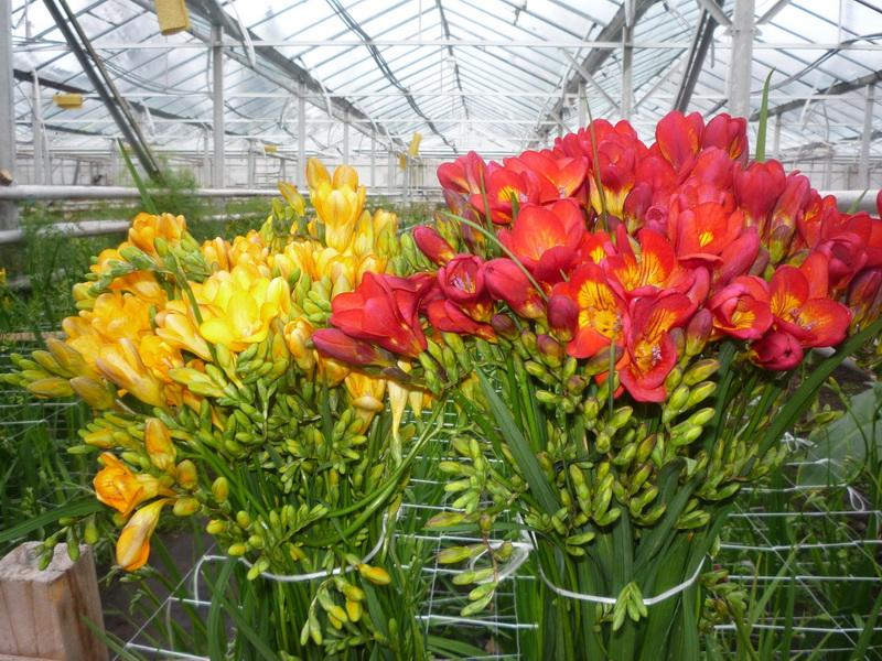 Vizualizati imaginile din articolul: Eladásra kínált virágok