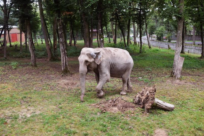 Vizualizati imaginile din articolul: Elefántok napja Marosvásárhelyen