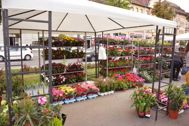 Vizualizati imaginile din articolul: Expoziţie de flori în centrul oraşului Tîrgu Mureş