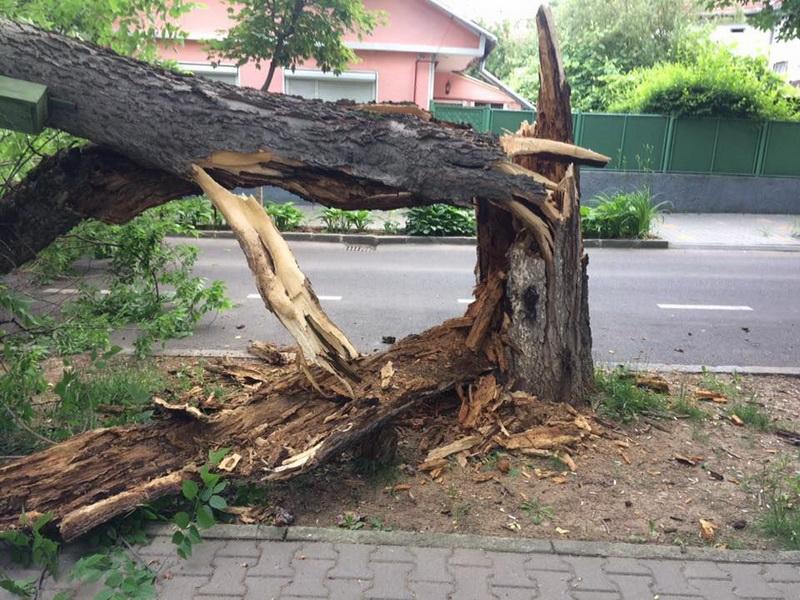 Vizualizati imaginile din articolul: Copac prăbuşit pe Bulevardul Cetăţii! Arborii uscaţi sunt pericol public, iar Primăria nu poate lua măsuri fără avizul comisiei de specialitate, din care fac parte ONG-urile şi consilierii locali