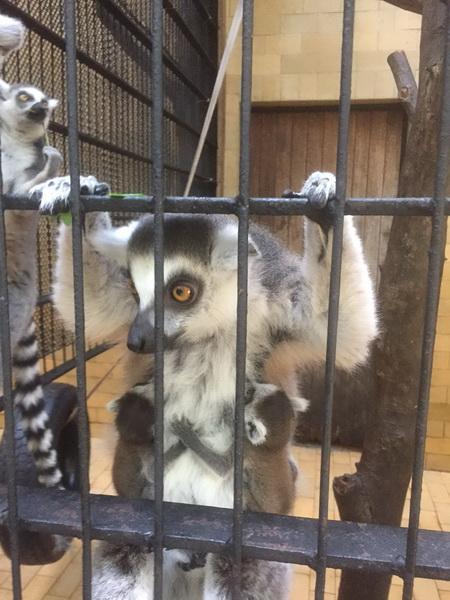 Vizualizati imaginile din articolul: 150.000 de bilete vândute la Zoo, în prima jumătate de an