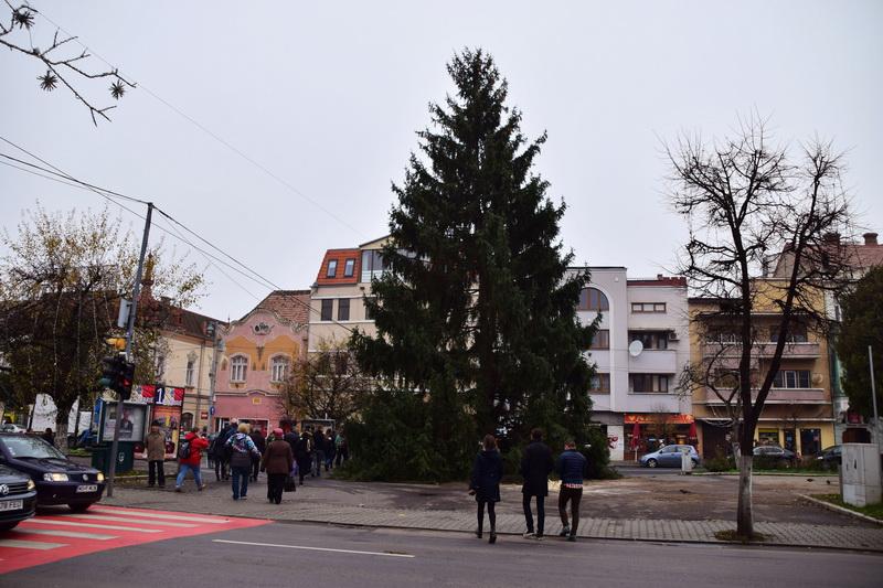 Vizualizati imaginile din articolul: Bradul de Crăciun, pregătit de sărbători
