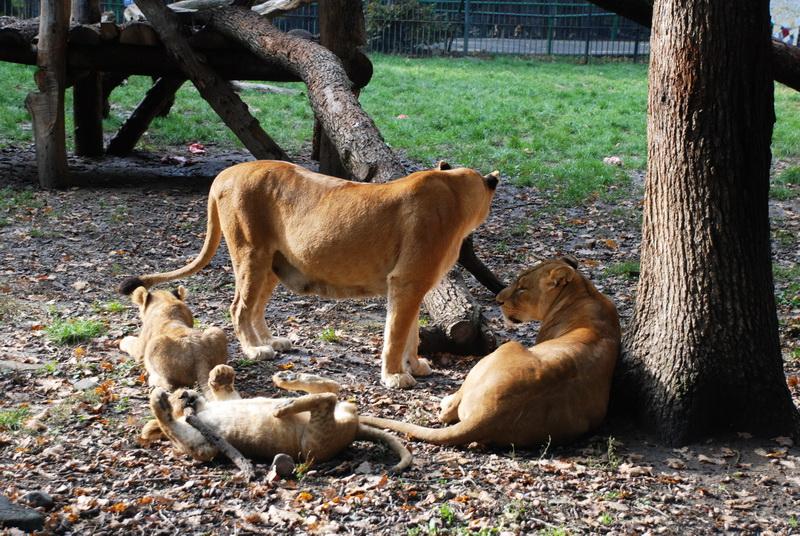 Vizualizati imaginile din articolul: Kedves marosvásárhelyiek, várjuk önöket, hogy meglátogassák a Marosvásárhelyi Állatkertet!