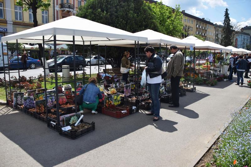Vizualizati imaginile din articolul: Marosvásárhely Polgármesteri Hivatala eladásra kínál virágokat a tavaszi ünnepek alkalmából