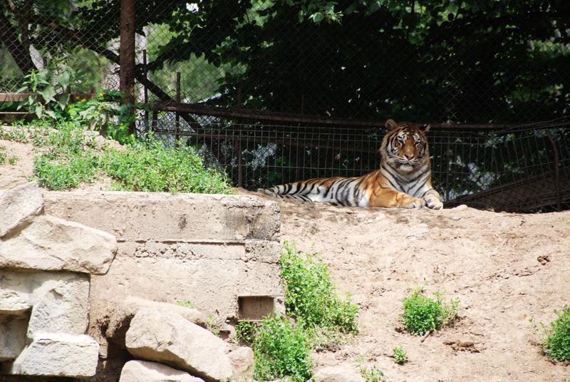 Vizualizati imaginile din articolul: De Ziua Copilului, Încasări record la Grădina Zoologică