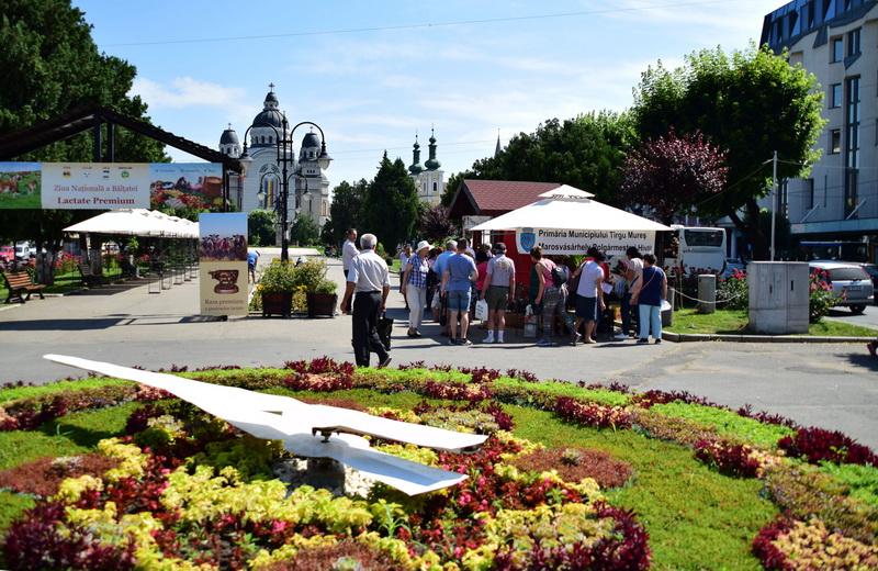 Vizualizati imaginile din articolul: Claudiu Maior: 'Recoltă bogată și în acest an, la Serele Primăriei Târgu Mureș!'