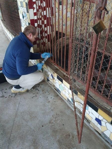 Vizualizati imaginile din articolul: Ursul rănit în localitatea Bălăușeri și îngrijit la Zoo Târgu Mureș a ieșit din comă! Medicul veterinar și angajații Grădinii Zoologice îl supraveghează zi și noapte.