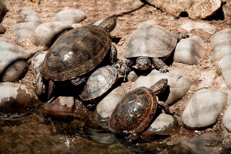 """Vizualizati imaginile din articolul: """"Ismerjük jobban meg egymást!' Újabb program a kicsiknek, a nyári vakációban, a Marosvásárhelyi Állatkertben"""