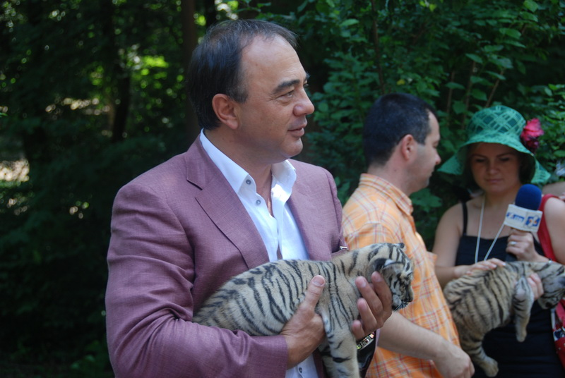 Vizualizati imaginile din articolul: At Tirgu Mures Zoo  the Mayor was welcomed by two tiger whelps(this article is available in Romanian and Hungarian language only)