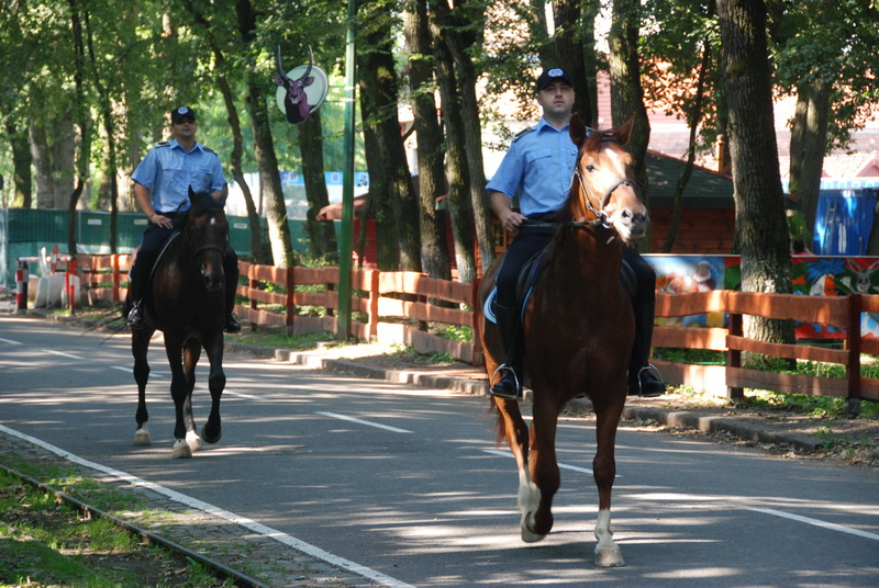 Vizualizati imaginile din articolul: In Tirgu Mures, Local Police on horses (this article is available in Romanian and Hungarian language only)